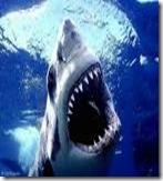Shark doing what sharks do.