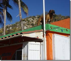 San Bartola roof dog