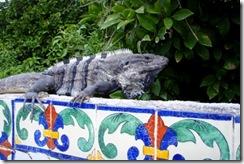 Yal Ku iguana