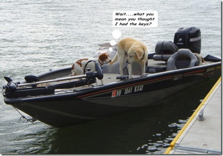 dogs at helm