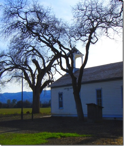 Capay Valley school tree