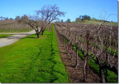 Capay Winery vineyard