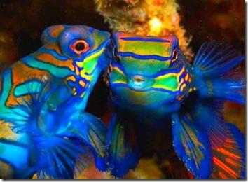 Atlantis Puerto Gallera fish