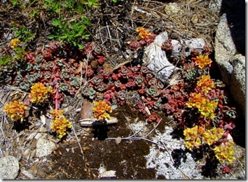 trailside succulents