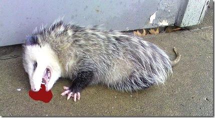 R.O.U.S. playing possum