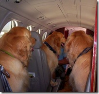 Proof that airline travel has gone to the dogs