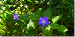 lakeside blossum
