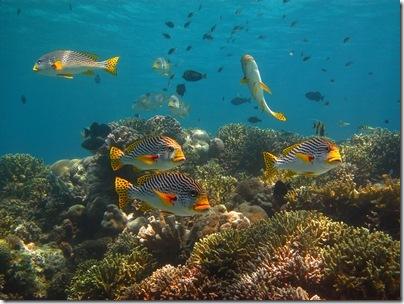 ralphs reef pic