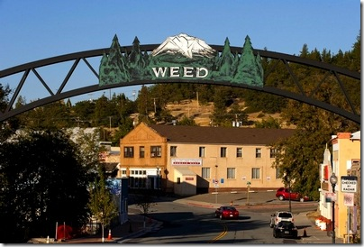 A town full of weed stuff.