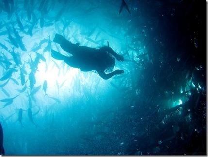 That's my dive buddy, Amada.