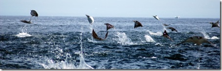 Rays jumping for joy?
