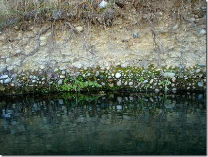 Lake bank pebble garden.