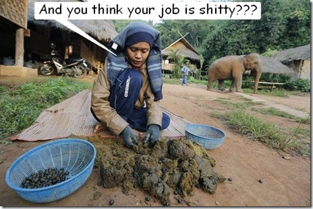 elephant coffee harvesting