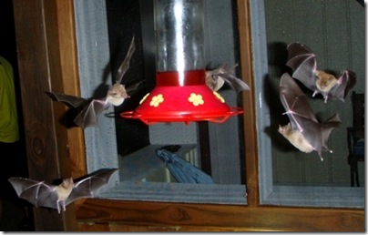 bat patrol