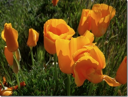 The poppies were popping.