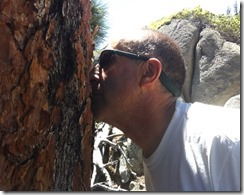 sniffing the pine