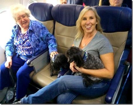 SWA comfort dogs on board