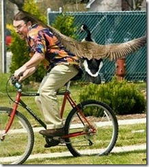 goose attack bike rider