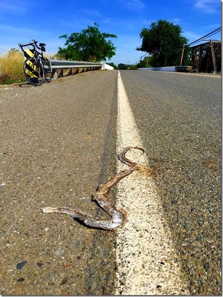 Road kill edit