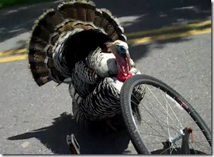 turkey versus bike tire